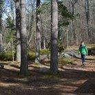 Reippailua metsässä